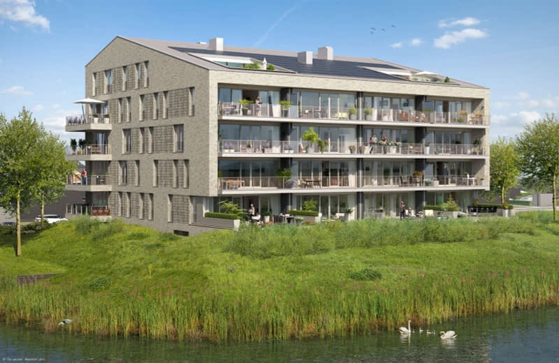 Waterlelie Klapwijkse Pier HUIZEN010 berkel en rodenrijs